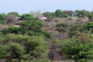 Beautiful 1161.7914 ha Kalahari stock farm for sale  This is a well-known beef cattle farm in the Kalahari, situated 30km between ...