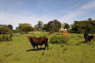 Huge rambling farm house on 174ha of Eastern Cape bush, suitable as a lifestyle farm or for future development as it's only a ...