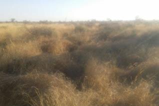 10km vanaf Kimberley op Douglas pad Wild – bees en skaap  8000 ha  Plaas bestaan uit Rooigrond, bossieveld, savanna veld met ...