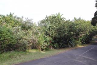 Price reduced!!!   This stand slopes slightly downhill and is situated in a good ...