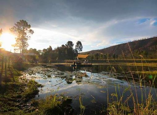 On auction: Wine estate 20km from Plettenberg Bay