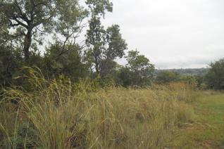 Vacant land / plot for sale in Koro Creek Golf Estate - Modimolle