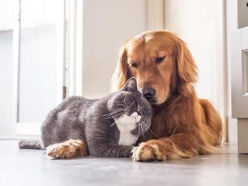 Pet ownership: These are the legal requirements you should