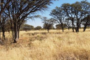 This 3839 hectare farm consists of 3 title deeds but is sold as a unit. It consists of approximately 1500 hectares planted pastures and ...
