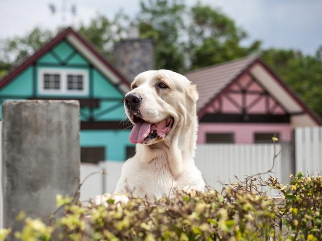 An aggressive guard dog could cost you - Home Owners, Advice
