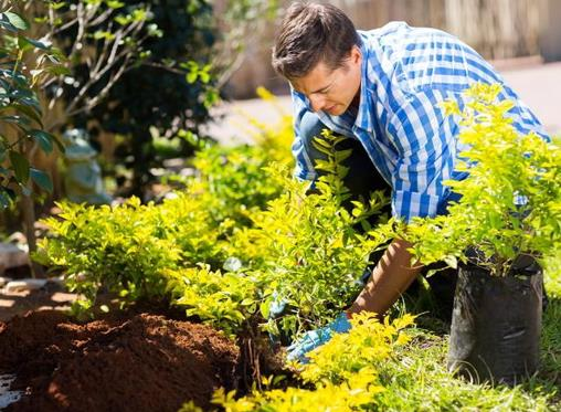 15 top tips for making your garden a water-wise haven
