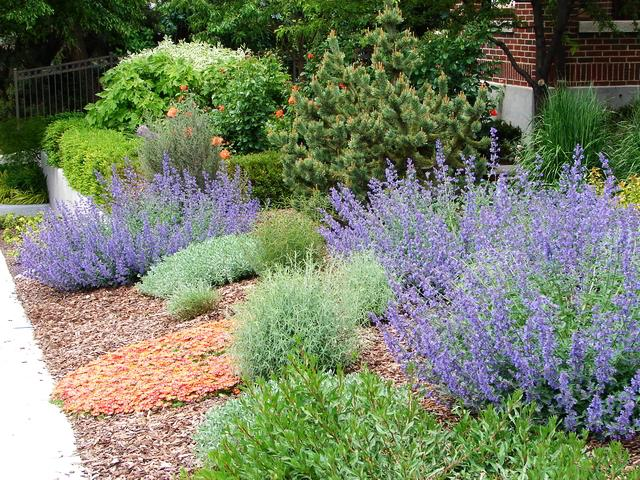 How to design a lawn-free landscape