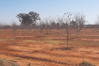 25.7 ha Registered Irrigation 1 x 15 ha Valley Pivot 450 mm Annual Rainfall Canal water from Vaalriver 18 hour dam  House with 2 ...
