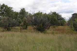 This spacious vacant land of 1537m is situated in the beautiful town of Marquard. The stand is situated in a prime part of town, near ...