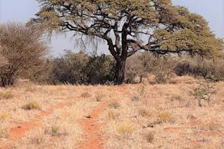 1117 ha waarvan 230 ha wildskamp is met 2.4m  hoë omheining. 11 Kampe met veekrale en suipings. 3 Toegeruste boorgate (2 ...