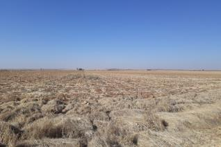 Auction Date: 24 October 2019  Time: 18:00 Location: 13 Nywerheids Avenue, Bothaville   297,6534 Ha in extent Approximately 200 Ha ...