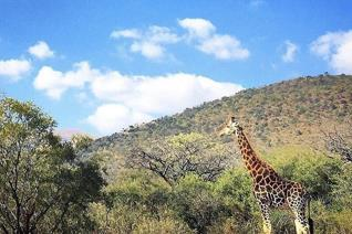 This prime stand is set within the secure Greenstone Wildlife Estate. The Estate has an abundance of bird life, and plenty species of ...