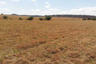 This 376ha farm is located 68km from Bloemfontein, with top Rooigrass pasture, Vlei pasture with little ridges and warm veld.  Cattle ...
