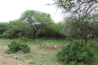 This vacant stand has got a water connection and a electricity point is available.  Beautiful trees all over the stand. Situated in a ...