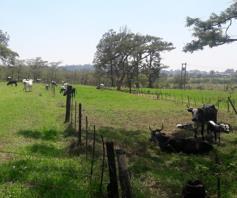 Farm for sale in Glencoe