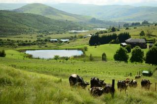 Close enough to the town of Kokstad for easy access to work and school, this 20ha ...