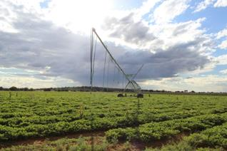 Desciption:   Irrigation and crop farm near Hertzogville. Excellent red soil arable land and grazing.