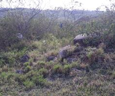 Vacant Land / Plot for sale in Gamalakhe