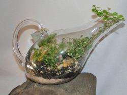 Care Tips For Closed Open Terrariums Garden Outdoor Lifestyle