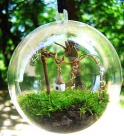 Essentially A Terrarium Comprises Gl Container That Encloses Miniature Garden Of Small Plants