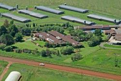 Jhb South poultry farm on auction 17/2 - Auctions, News