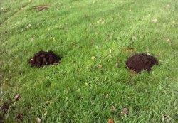 Control moles in a garden Garden Outdoor Lifestyle